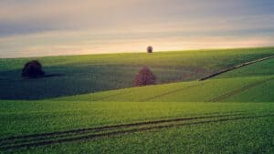 מהי שווי קרקע חקלאית